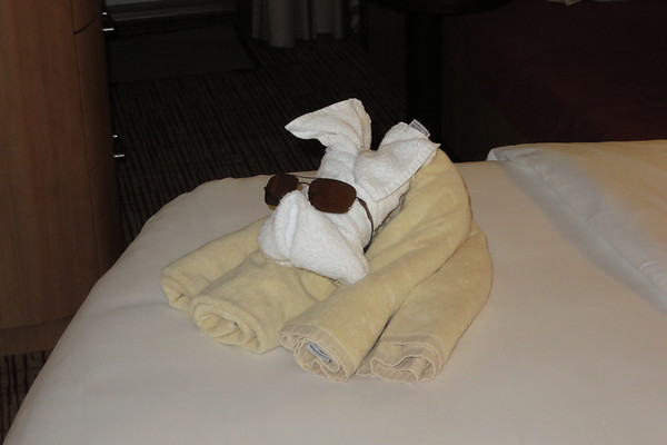 As another day comes to a close we are visited by a very cool towel dog.